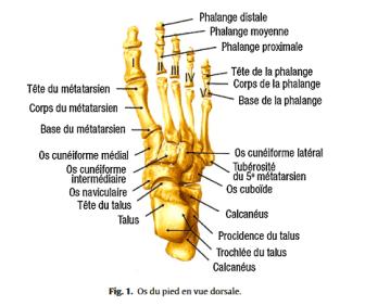 Fig 1 Proformed - formations medicales
