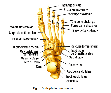 douleur avant pied