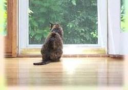 Senastion kitty looking out door