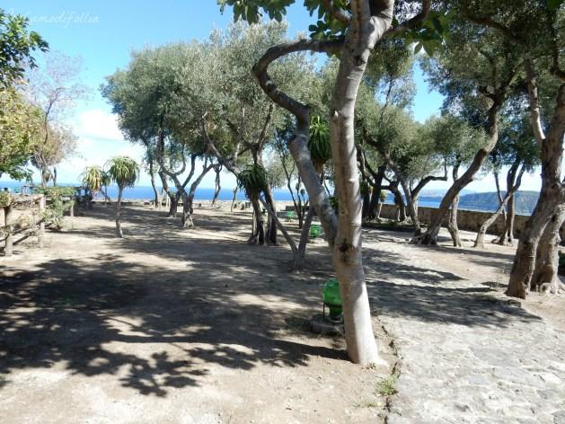castello aragonese ischia terrazzo degli ulivi