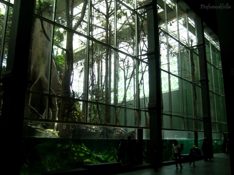 foresta amazzonica allagata cosmocaixa