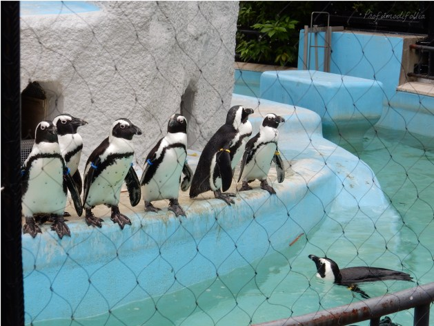 diario di viaggio tokyo zoo di ueno