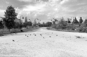 Parco di San Donato a Novoli, estate 2018 la poca ombra non spaventa i piccioni.
