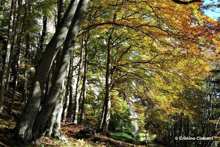 Bosco delle Fate - Progettoideal chiusi della verna (©cristina ciabatti)