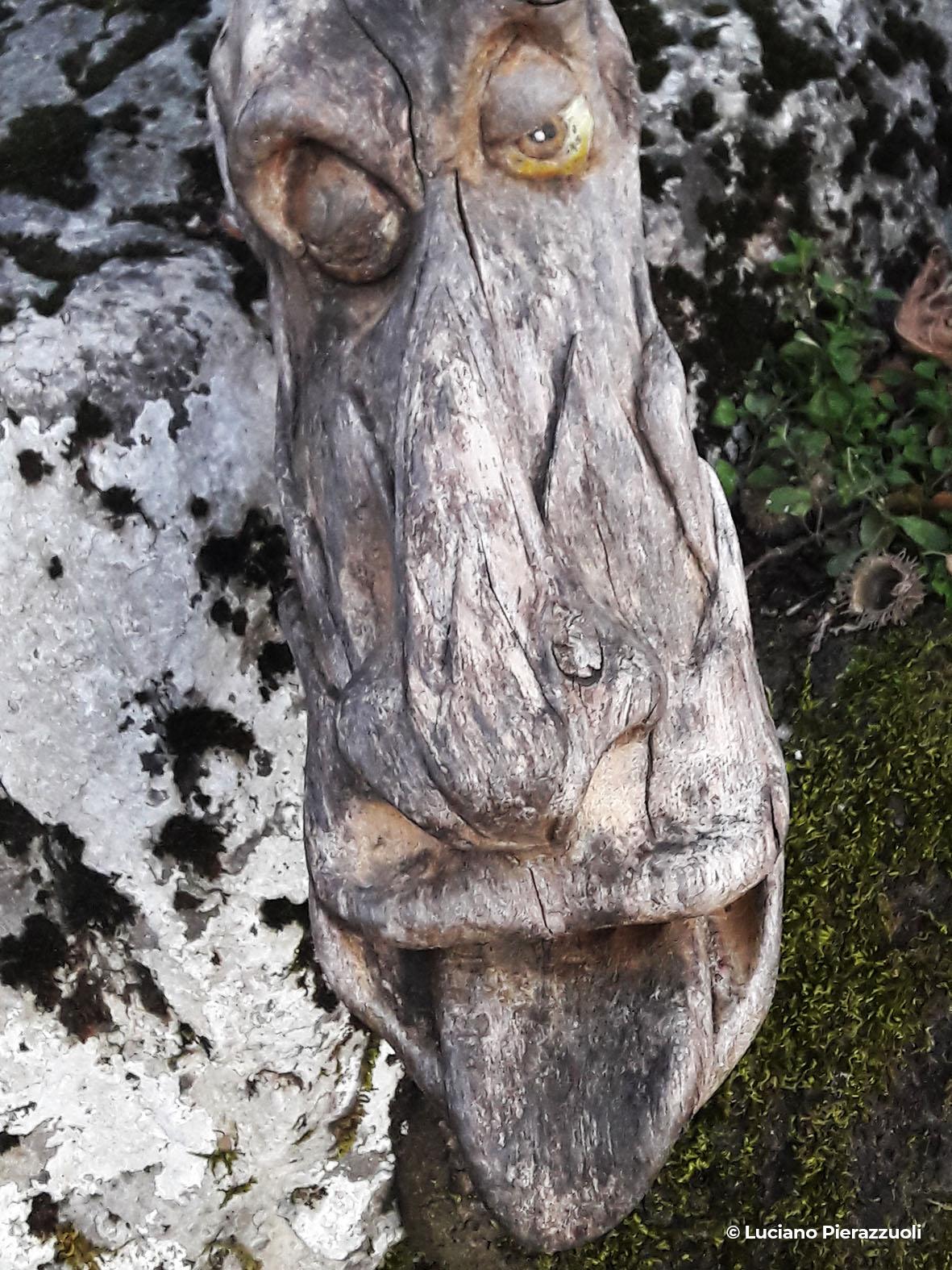 Sentieri naturalistici - Progettoidea chiusi della verna (©luciano pierazzuoli)5