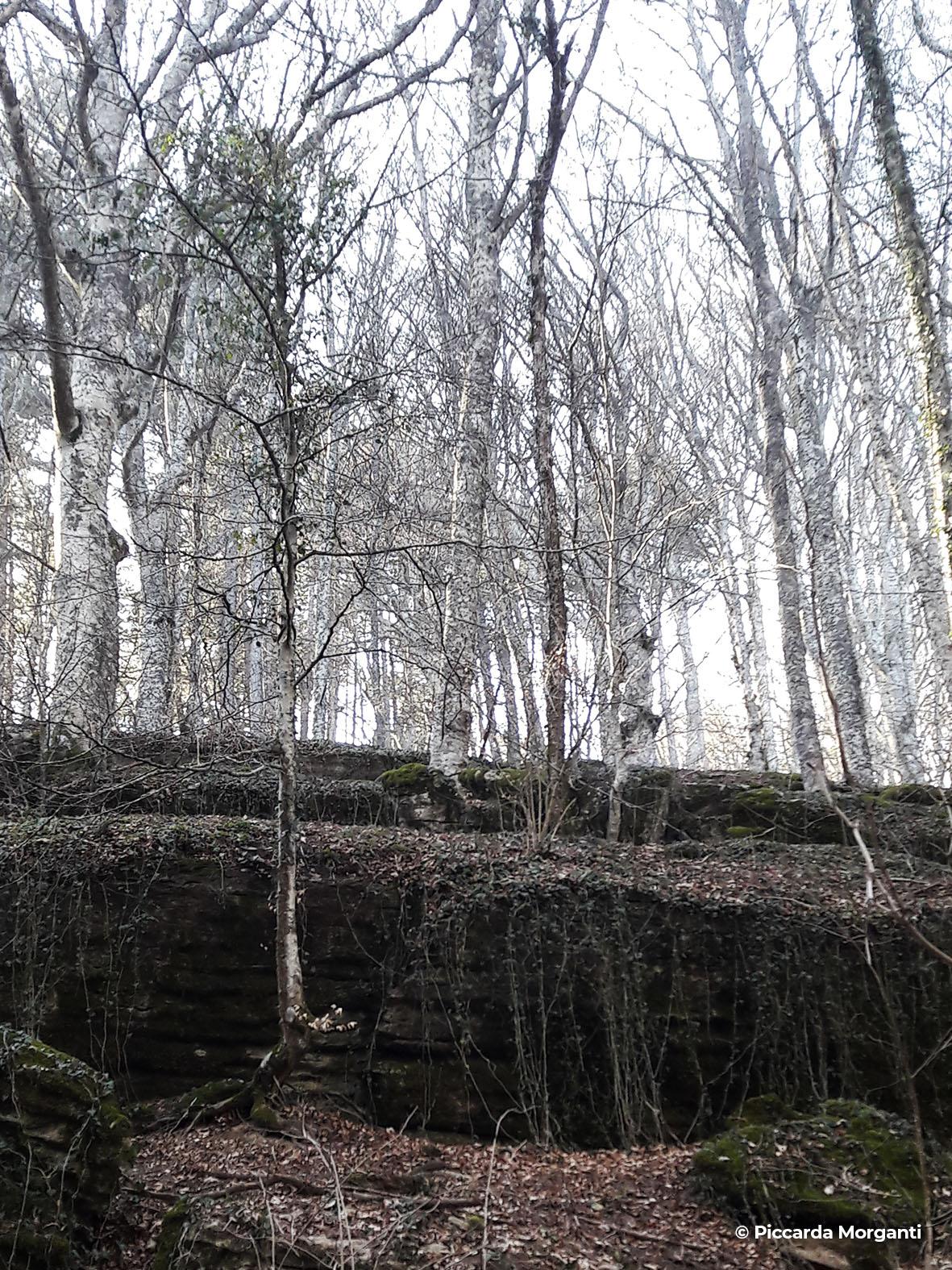 Sentieri naturalistici - Progettoidea chiusi della verna (©piccarda morganti)3