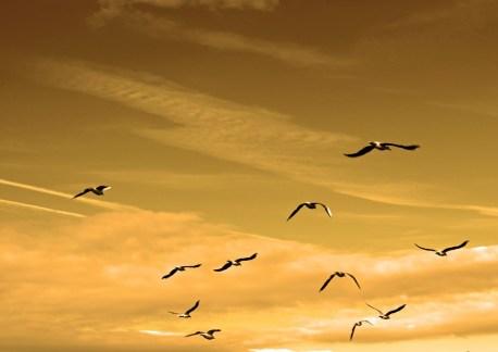 liderazgo-comercial, diez cualidades del liderazgo empresarial