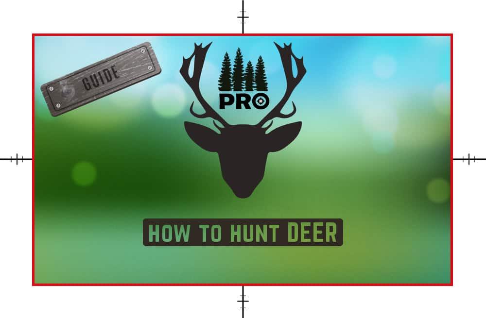 How to Hunt Deer - Deer Hunting Tips - proHuntingHacks