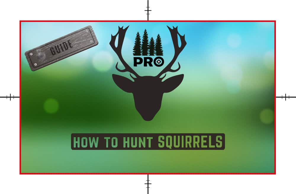 How to Hunt Squirrels - Squirrels Hunting Tips - proHuntingHacks