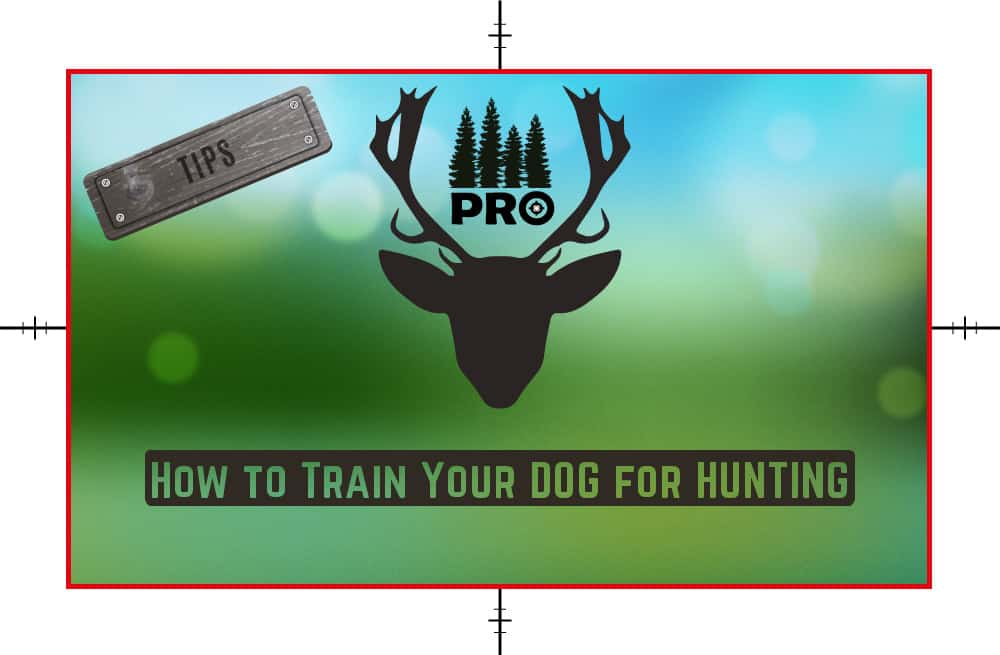 How to Train Dog for Hunting - proHuntingHacks