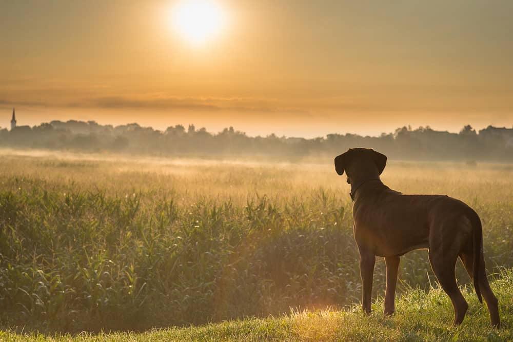 Gun Dog Training Tips - ProHuntingHacks