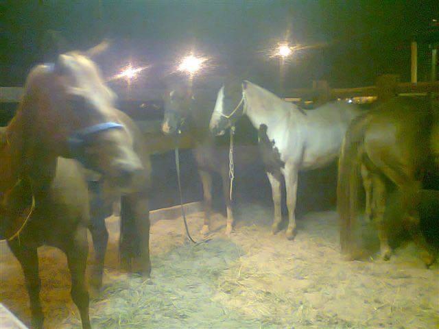 Delmar Brazil - Livestock-02_800px