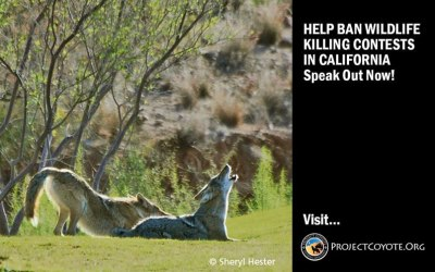 ACTION ALERT: Your Voice Needed for CA Wildlife!