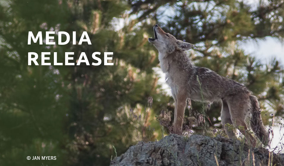 More than 60 Prominent Scientists, Ethicists, Veterinarians, and Attorneys Urge Florida Fish & Wildlife Conservation Commission to Ban Coyote and Fox Penning