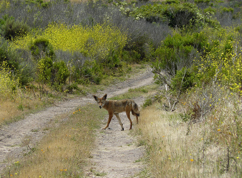 California wildlife managers ban prizes for competitive hunts