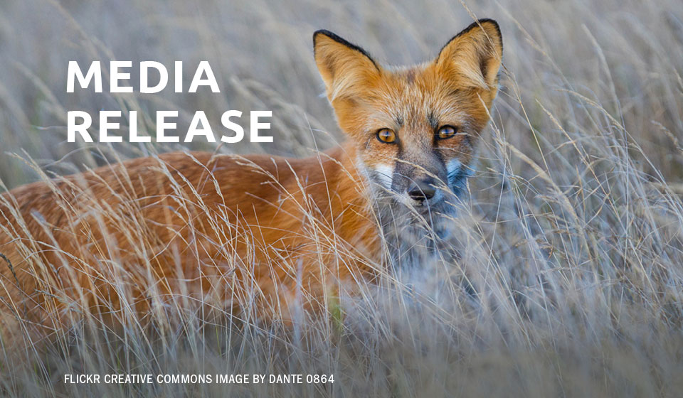 Strong Call for Immediate Ban on Coyote and Fox Penning