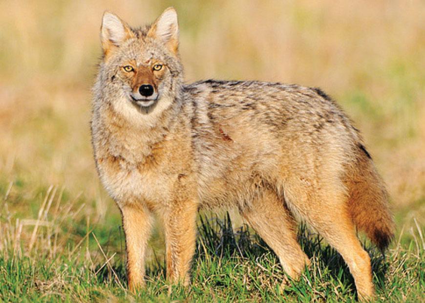 USDA Wildlife Services