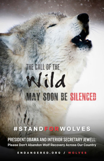 ACTION ALERT: Speak Out for Wolves! Join Us for Rallies & Submit Your Comment to the FWS Supporting Federal Wolf Protection