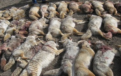 ACTION ALERT: Help Ban Wildlife Killing Contests in California!