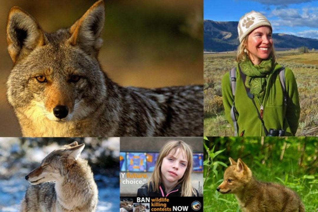 Camilla Fox & the North American Native Song Dog