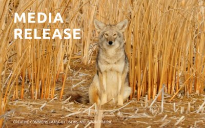 Lawsuit Filed Against Federal Wildlife-killing Program in California
