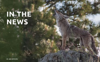 Idaho Settlement Ensures Notification for Wildlife-killing Contests
