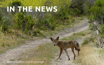 Georgia DNR opens coyote-killing contest; animal advocates balk