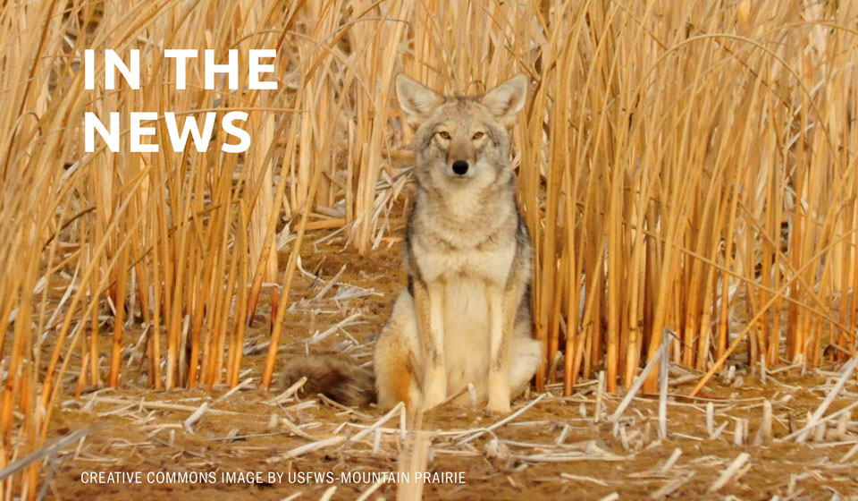 Reader View: Coyote-killing contests in the Land of Enchantment