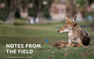 Coyote Friendly Communities: Meet Citizen Dan