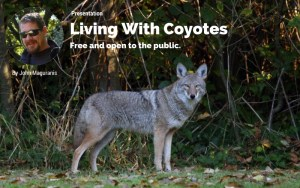 Medford, MA: Living With Coyotes @ Medford City Hall | Medford | Massachusetts | United States