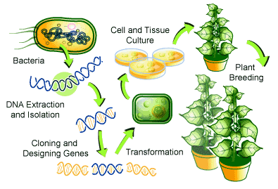 From microbes to plants in bio remediation (Source: Oregon State, 2013)