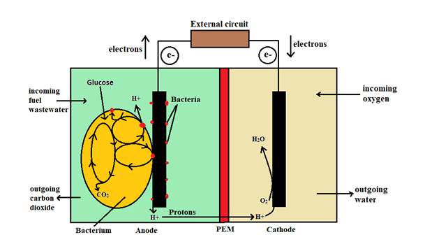 Schematic diagram of microbial fuel cells with PEM membrane (Bose et al. 2018)