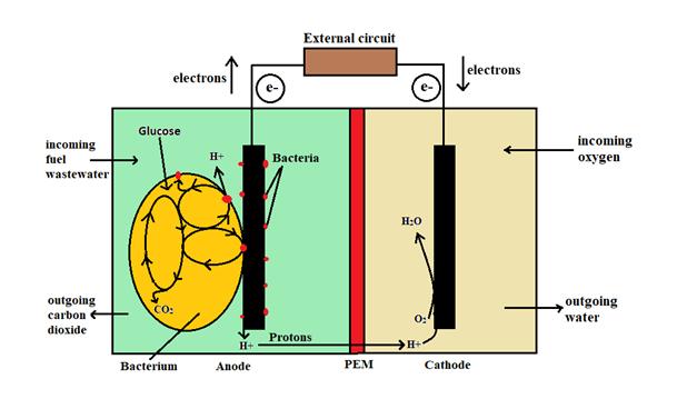 Schematic diagram of microbial fuel cells with PEM membrane (Bose et al. 2018)