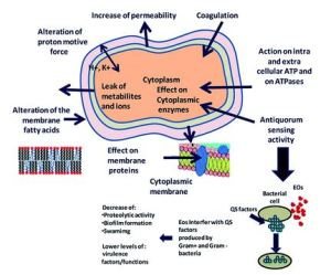 Mechanism of alkaloids and terpenoids in antibacterial activities (Bazaka et al., 2015)