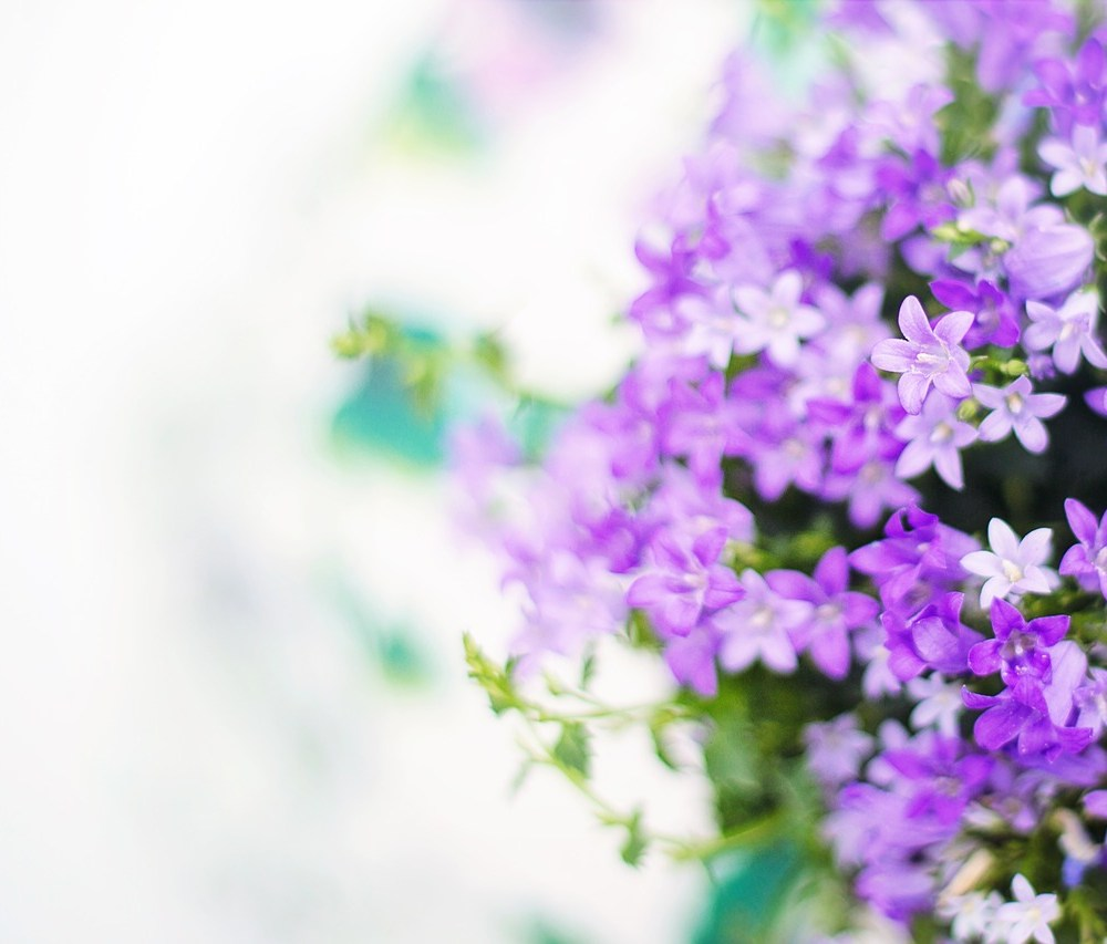 purple-flowers-2191635_1280