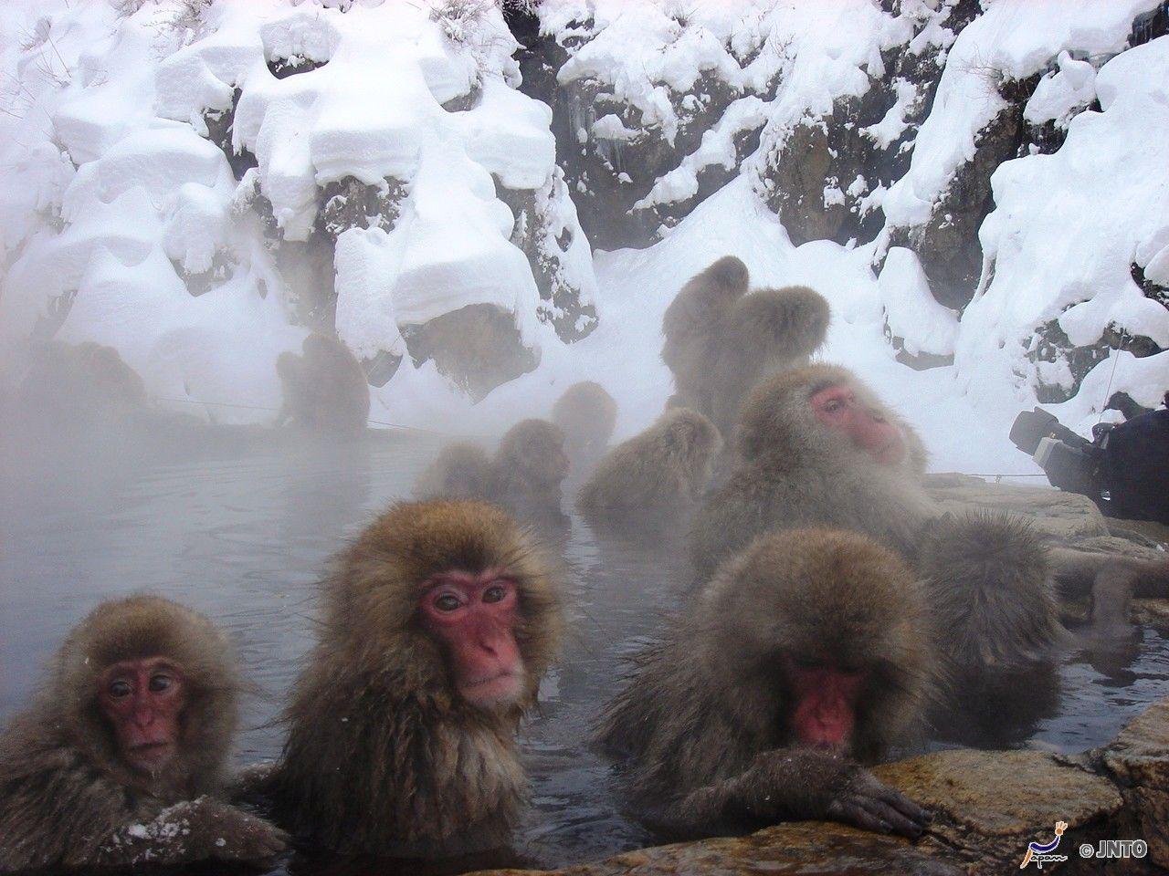 Un bagno caldo nella neve  Projectmanu