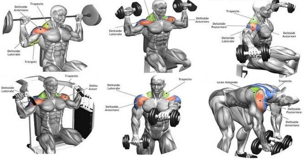 The Complete Guide To Delts Training