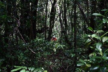 dan obrien bentprop.org palau jungle hiking