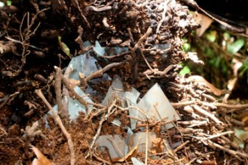 glass in tree roots palau