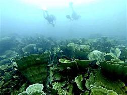 Interesting hard coral palau