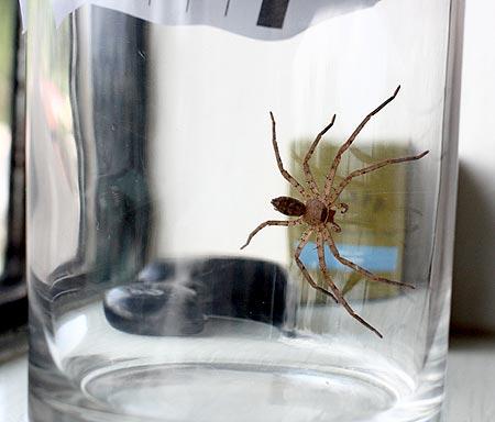 shower spider palau