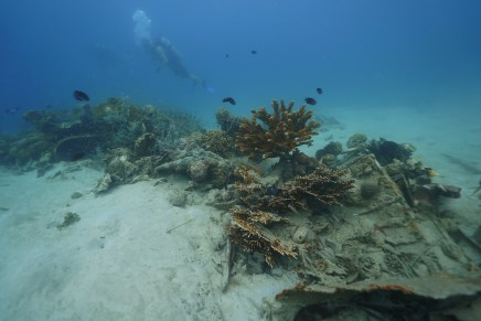 The underwater wreckage of a B-25 found and documented by Project Recover in Papua New Guinea.