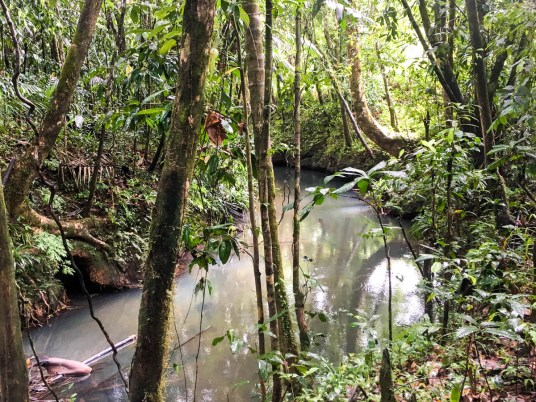 The deep jungles of Palau during a Palau WWII POW search
