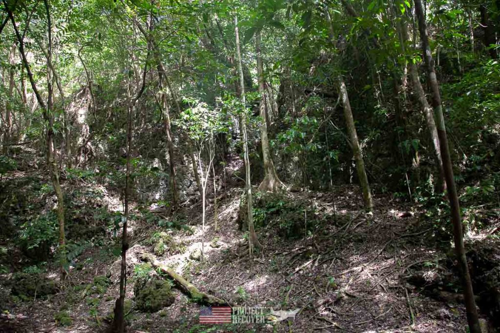 Jungle in Peleliu