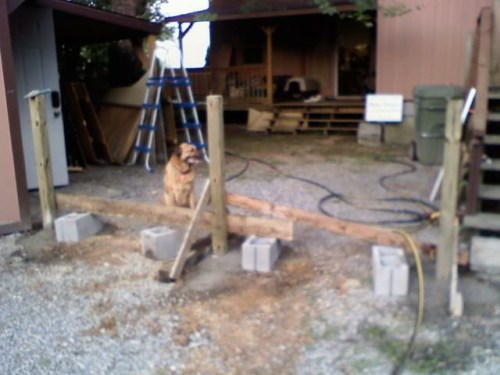 Jack, our German Shepard Chow, waiting behind a fence that is not built yet. - Cat-proof screen, Dog-proof screen, Racoon-proof, Squirrel-proof screen, Animal-Proof - Pet-Proof Screen – Project Small House