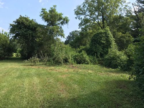 We have already cleared this area out. - Land For Sale: .44 acre In Druid Hills, Hendersonville, NC – Project Small House