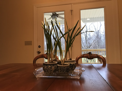 Daffodil bulbs on the table - Getting Settled and Enjoying Spring – Project Small House