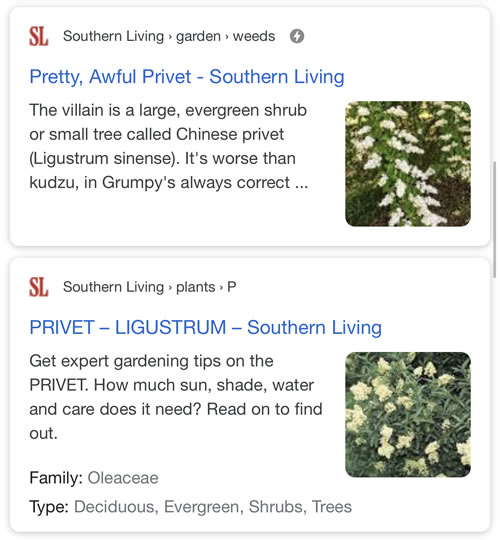 Southern Living: How to Grow Privet and How to Kill Privet