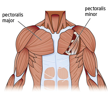 Chest Building 101 So You Wanna Get Jacked