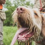 Training a Bird Dog